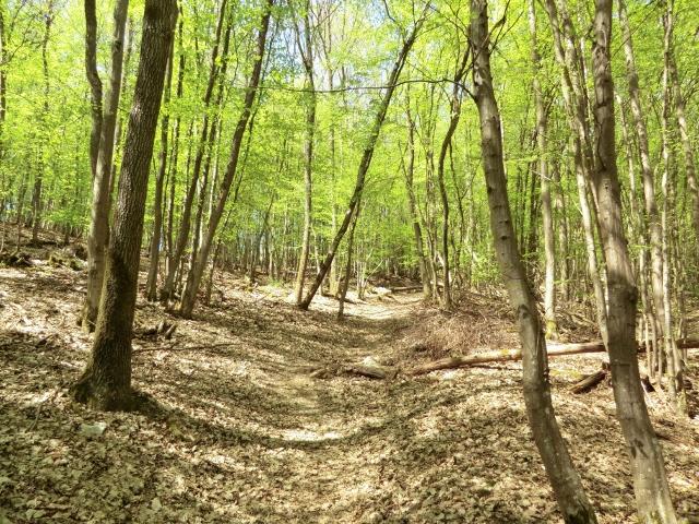 Der Soonwaldsteig Etappe 1