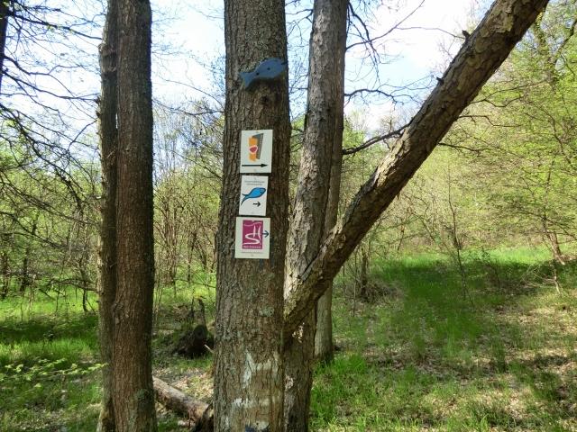 Soonwaldsteig Etappe 2